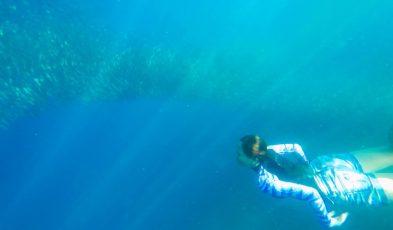 pescador island sardine run