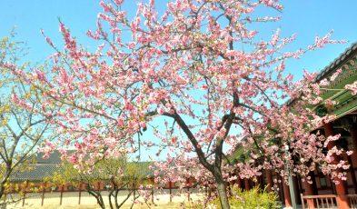 south korea spring