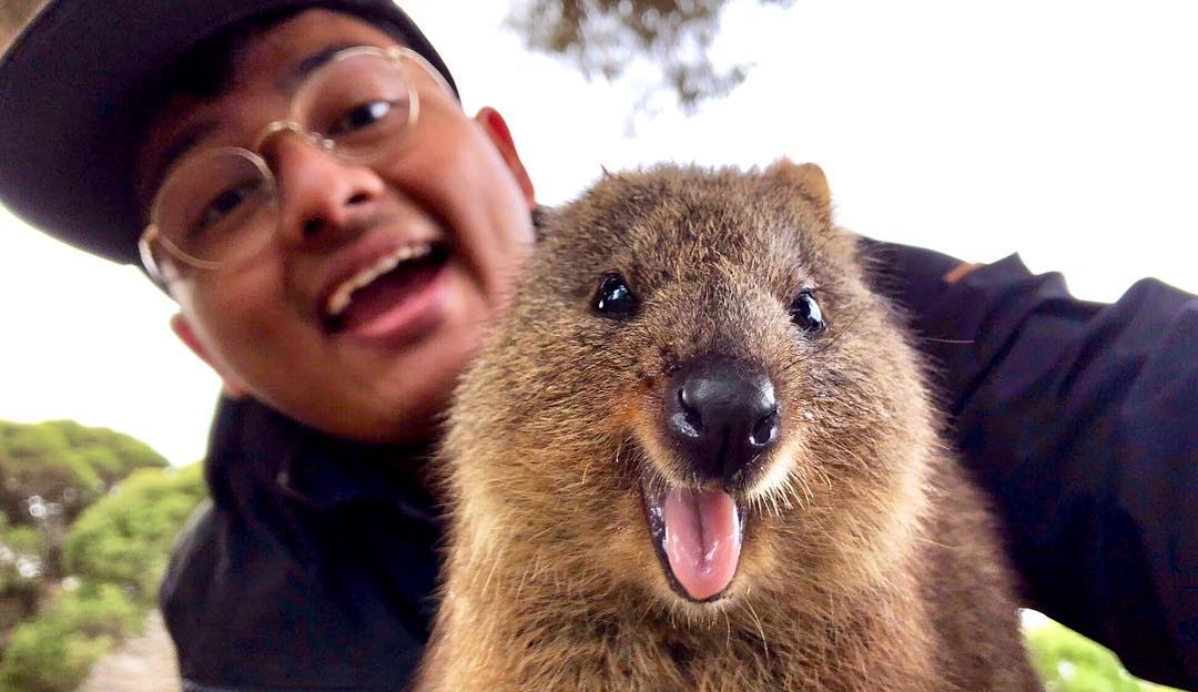 Quokka selfie at Rottnest Island, Perth, Western Australia