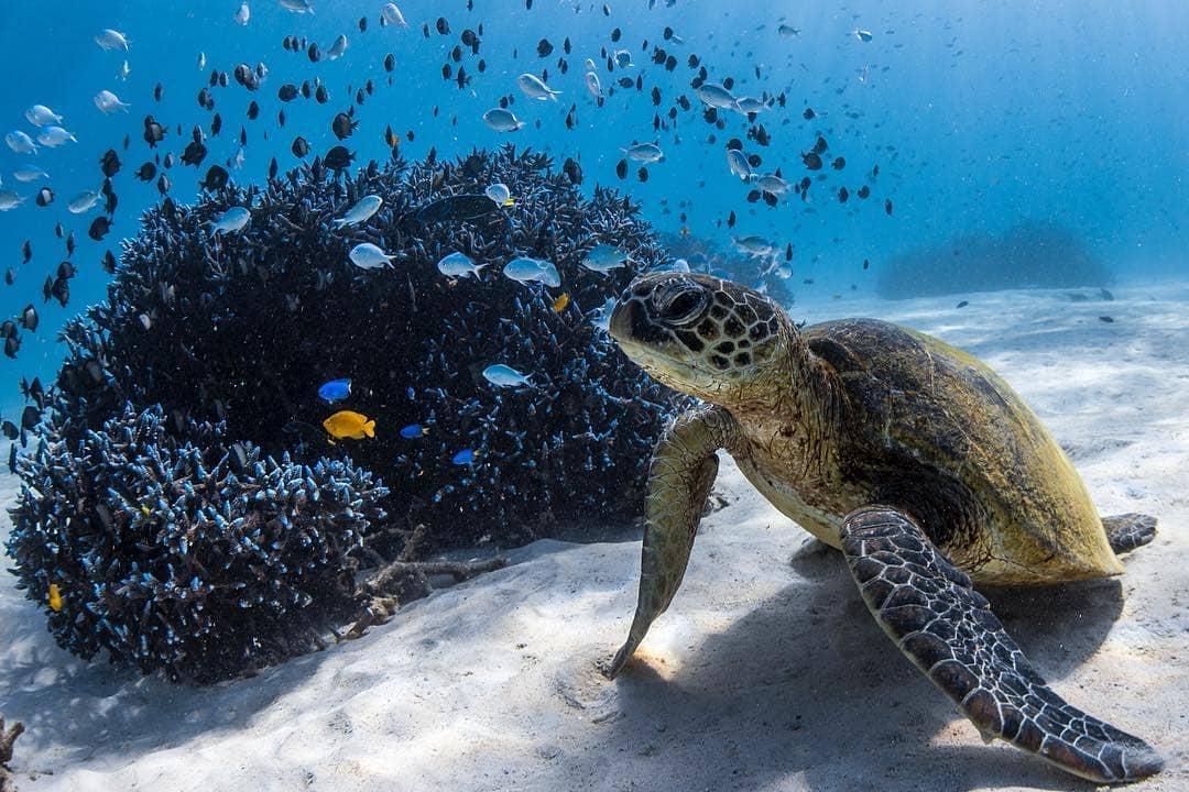 Sea turtles at Ningaloo Reef, Western Australia