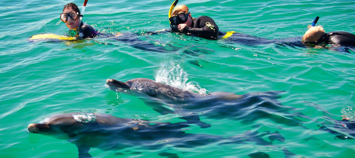 Swimming with dolphins, Western Australia