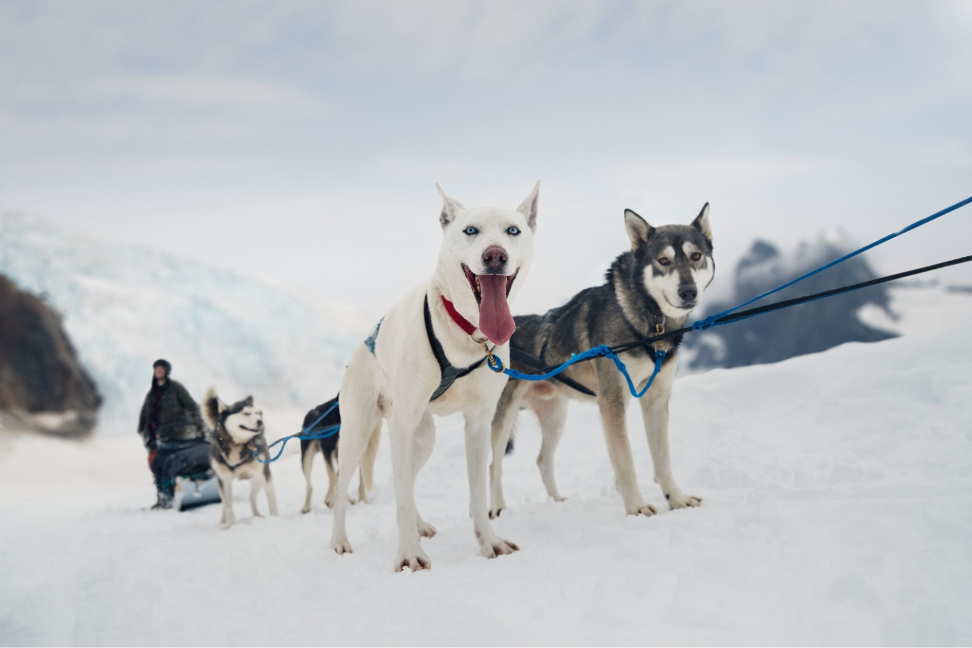 Dog Sledding on the Mendenhall Glacier, Alaska