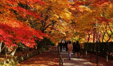 autumn in asia