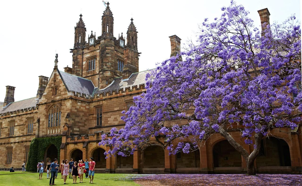 Jacaranda viewing in University of Sydney in Spring