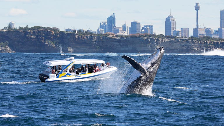 Whale watching in Sydney during spring