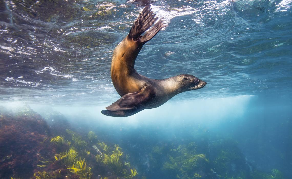 Seal-watching at Montague Islands