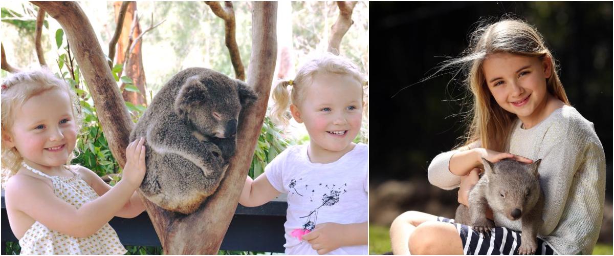 Baby animals at the Australian Reptile Park, Sydney
