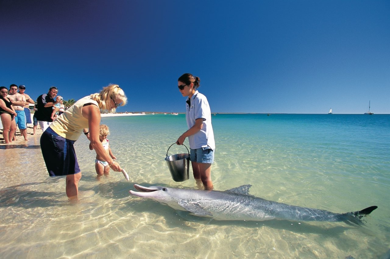 Swimming with dolphins at Shark Bay