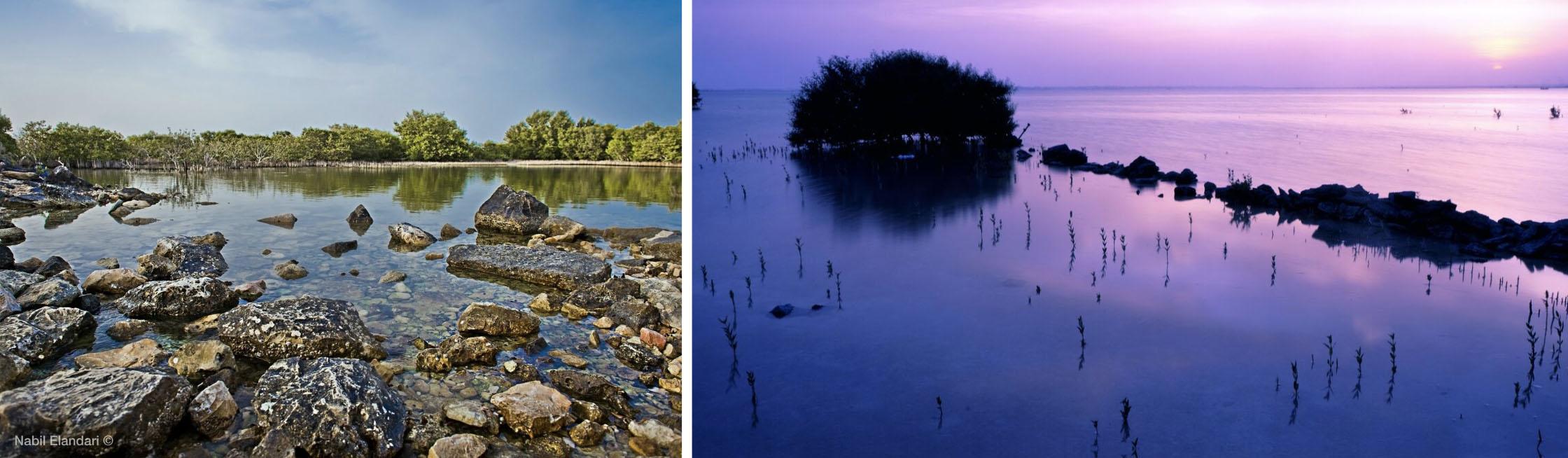 Al Thakira mangrove forest