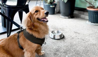 dog friendly cafe