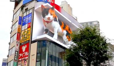 giant cat tokyo