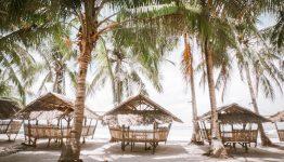 philippines coconut trees