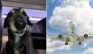 dog on flight